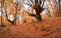 Red Autmn Forest - PhotoDune Item for Sale