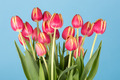 Bunch of red tulips on a white background - PhotoDune Item for Sale