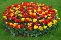 Colorful spring tulip garden - PhotoDune Item for Sale