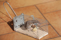 trapped mouse - PhotoDune Item for Sale
