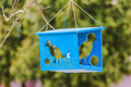 Wooden bird feeder with silhouettes of birds - PhotoDune Item for Sale
