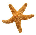 Orange Starfish - PhotoDune Item for Sale