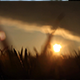 Field in the Sunset 1 - VideoHive Item for Sale