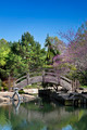 Japanese Water Garden Bridge - PhotoDune Item for Sale