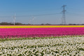 Dutch tulip field with wind turbines and a power pylon - PhotoDune Item for Sale