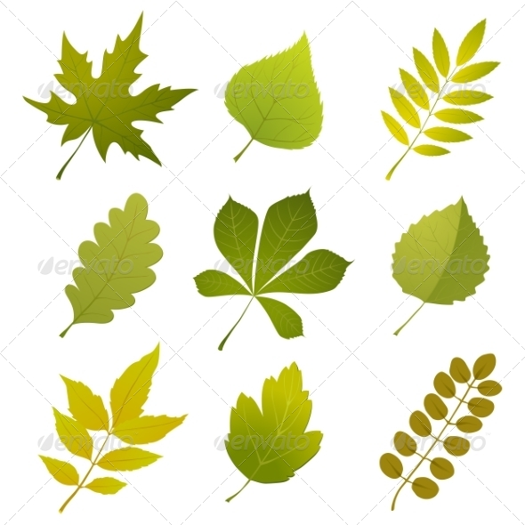 GraphicRiver Green Leaves 7565020
