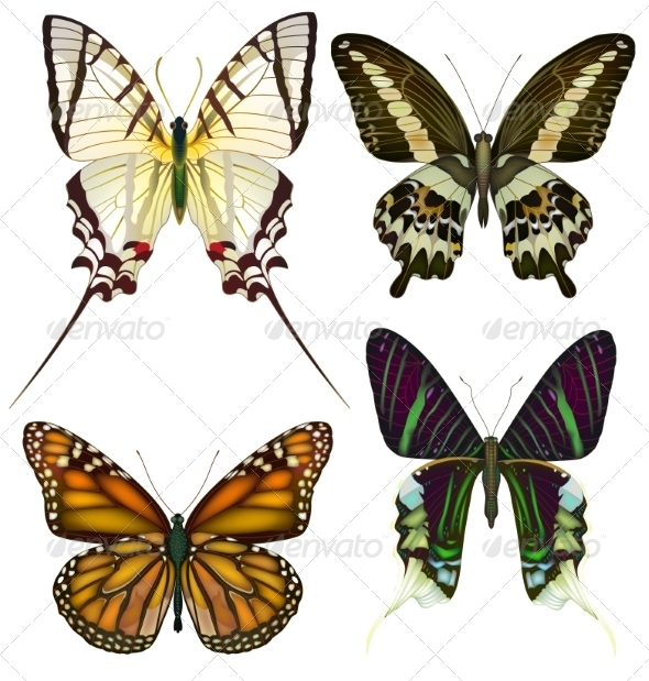 GraphicRiver Butterflies 7573158