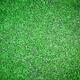 Beautiful deep green grass texture - PhotoDune Item for Sale