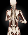 Female medical skeleton - PhotoDune Item for Sale
