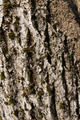 Closeup of a tree bark texture - PhotoDune Item for Sale