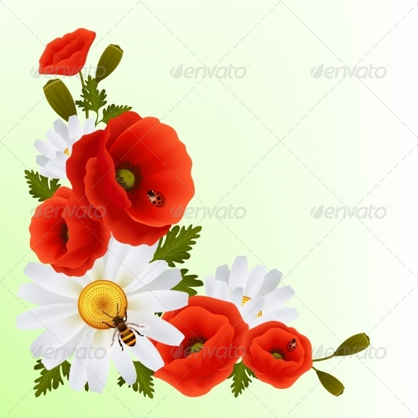 GraphicRiver Poppy Daisy Background 7576898