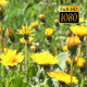 The Flower Field 14 - VideoHive Item for Sale