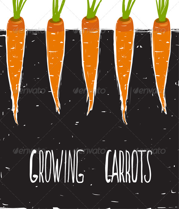 GraphicRiver Growing Carrots Freehand Drawing and Lettering 7584379