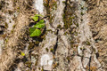 Green Ivy leaves on the tree bark - PhotoDune Item for Sale
