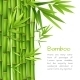 Realistic Bamboo Background - GraphicRiver Item for Sale