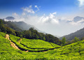 mountain tea plantation in India - PhotoDune Item for Sale