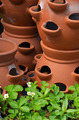 Clay pots and strawberry plants - PhotoDune Item for Sale