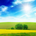 Green field illuminated by sunlight - PhotoDune Item for Sale