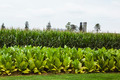 farm with vegetable crops - PhotoDune Item for Sale