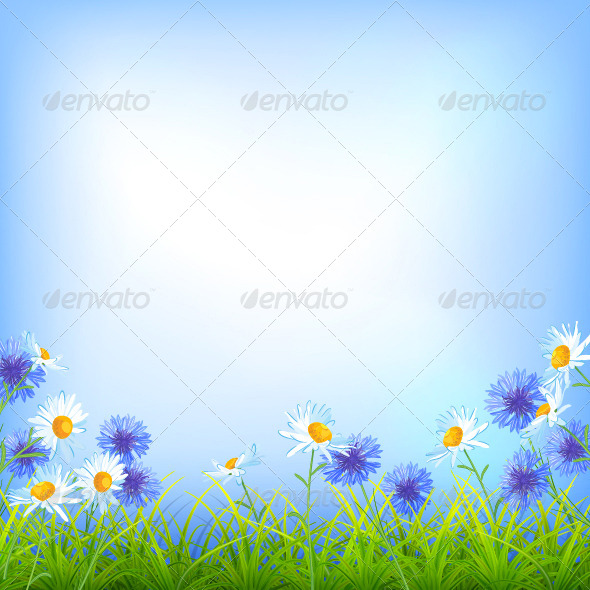 GraphicRiver Field Flowers Daisy Cornflower Grass Background 7627252