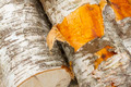 Birch logs fresh cut - PhotoDune Item for Sale