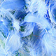 Blue Feather Revealer - VideoHive Item for Sale