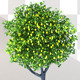 Animated Lemon Tree - VideoHive Item for Sale