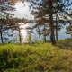 Sunny Evening In The Forest  - VideoHive Item for Sale