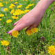 Hand Gently Caresses Field Flowers - VideoHive Item for Sale