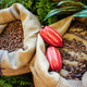 Cocoa Beans and Fruits - PhotoDune Item for Sale