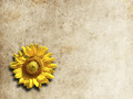 sunflower frame - PhotoDune Item for Sale