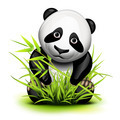 Little panda - PhotoDune Item for Sale