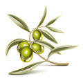Green olives branch - PhotoDune Item for Sale