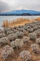 Mt Fuji - PhotoDune Item for Sale