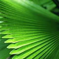 Bright green palm leaves - PhotoDune Item for Sale