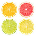 Slices of citrus fruits - PhotoDune Item for Sale