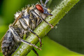 Insect on branch - PhotoDune Item for Sale