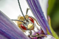 Insect between flower leaves - PhotoDune Item for Sale