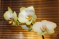 branch of a blossoming white orchid - PhotoDune Item for Sale
