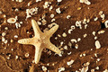 Starfish and sea shells on the exotic beach at warm sunset - PhotoDune Item for Sale