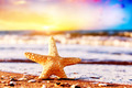 Starfish on the beach at warm sunset. Travel, vacation, holidays - PhotoDune Item for Sale