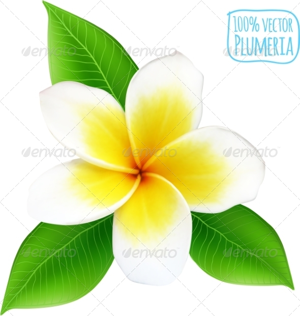 GraphicRiver Vector Realistic Isolated Plumeria Flower 7701518