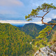 Relic pine tree at top of The Sokolica Mountain. - PhotoDune Item for Sale