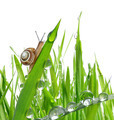 Snail on dewy grass - PhotoDune Item for Sale