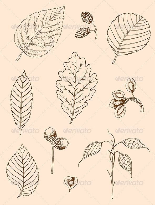 GraphicRiver Set of Vintage Leaves 7723637