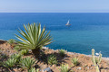 Coast of Madeira with palm tree and sailing ship at the sea - PhotoDune Item for Sale