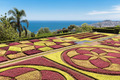 Botanical garden of Funchal at Madeira Island, Portugal - PhotoDune Item for Sale
