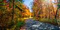 Road in fall forest - PhotoDune Item for Sale