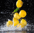 Lemons in water splash on black background - PhotoDune Item for Sale