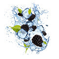 Ice blackberries on white background - PhotoDune Item for Sale